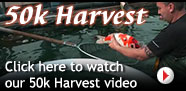 Click here to watch our 50k Harvest video